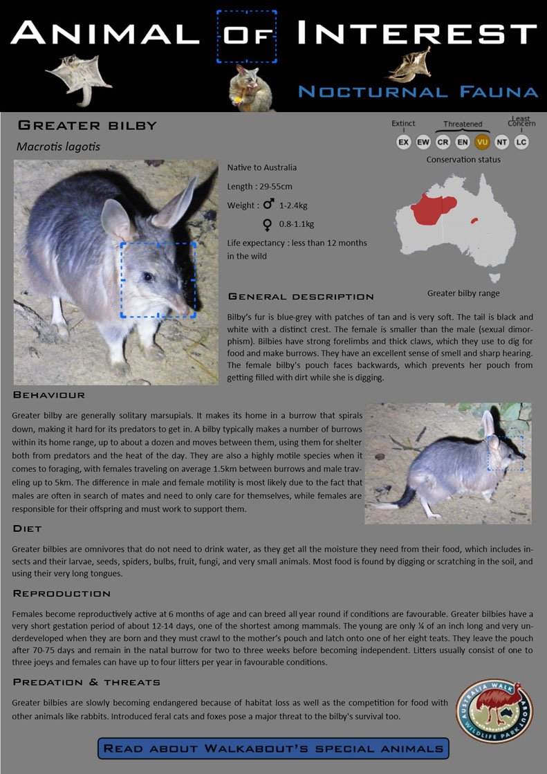 AOI Greater Bilby